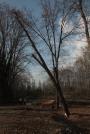 Biomeccanica del cedimento degli alberi formazione3t-marzo-2014-(7).jpg