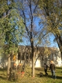 Seminario biomeccanica del cedimento degli alberi biomeccanica-alberi003.jpg