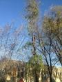 Seminario biomeccanica del cedimento degli alberi biomeccanica-alberi005.jpg