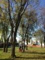 Seminario biomeccanica del cedimento degli alberi biomeccanica-alberi008.jpg