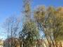 Seminario biomeccanica del cedimento degli alberi biomeccanica-alberi010.jpg