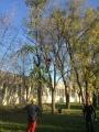 Seminario biomeccanica del cedimento degli alberi biomeccanica-alberi021.jpg