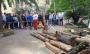 Cantieri di arboricoltura cantieri-arboricoltura-022.jpg