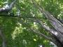CONSOLIDAMENTI DEGLI ALBERI consolidamento-alberi.jpg