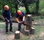 WORKSHOP CORRETTO UTILIZZO DELLA MOTOSEGA - 2012 corretto-uso-motosega201125.jpg