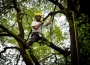 European Tree Worker f3t-European-tree-worker-(19).jpg