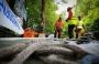 European Tree Worker f3t-European-tree-worker-(30).jpg