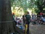 Workshop Treeclimbing e Sicurezza III - Abbattimenti - 2009 workshop-mark-bridge-09-034.jpg