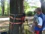Workshop Treeclimbing e Sicurezza III - Abbattimenti - 2009 workshop-mark-bridge-09-059.jpg
