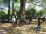 Workshop Treeclimbing e Sicurezza III - Abbattimenti - 2009 workshop-mark-bridge-09-085.jpg