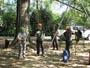 Workshop Treeclimbing e Sicurezza III - Abbattimenti - 2009 workshop-mark-bridge-09-090.jpg