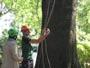 Workshop Treeclimbing e Sicurezza III - Abbattimenti - 2009 workshop-mark-bridge-09-102.jpg