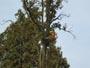Workshop Treeclimbing: nuovi materiali e loro corretto utilizzo, dpi, normative - 2009 IMG_2636.jpg