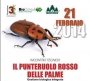 """Seminario tecnico """"Gestione biologica Punteruolo rosso"""" punteruolo-rosso01.jpg"""