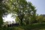Workshop Tree climbing e Arboricoltura - San Marino - 2014 2a.jpg
