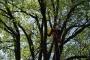 Workshop Tree climbing e Arboricoltura - San Marino - 2014 5d.jpg