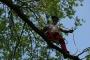 Workshop Tree climbing e Arboricoltura - San Marino - 2014 6d.jpg