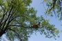 Workshop Tree climbing e Arboricoltura - San Marino - 2014 6e.jpg