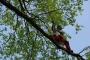 Workshop Tree climbing e Arboricoltura - San Marino - 2014 6f.jpg