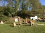 Workshop Uso della Motosega e Dimostrazioni di Treeclimbing - 2012 motosega-treeclimbing17.jpg