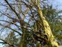 Tree Climbing Avanzato 02032010193.jpg
