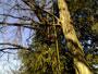 Tree Climbing Avanzato 02032010195.jpg