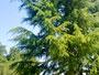 Tree Climbing Avanzato 21052010003.jpg