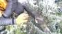 POTATURA DEGLI ALBERI ORNAMENTALI corso-potatura-alberi-05.jpg