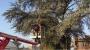 POTATURA DEGLI ALBERI ORNAMENTALI corso-potatura-alberi-22.JPG