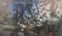 POTATURA DEGLI ALBERI ORNAMENTALI corso-potatura-alberi-23.JPG