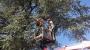POTATURA DEGLI ALBERI ORNAMENTALI corso-potatura-alberi-24.JPG