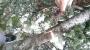 POTATURA DEGLI ALBERI ORNAMENTALI potatura-alberi-ornamentali-010.jpg
