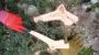 POTATURA DEGLI ALBERI ORNAMENTALI potatura-alberi-ornamentali-017.JPG