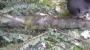 POTATURA DEGLI ALBERI ORNAMENTALI potatura-alberi-ornamentali-019.JPG