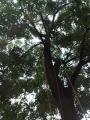 Professione arboricoltore professione-arboricoltore008.jpg