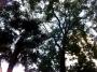 Professione arboricoltore professione-arboricoltore017.jpg