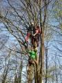 Gestione delle emergenze e recupero del ferito in tree climbing gestione-emergenze-tree-climbing-mark-bridge-002.jpg
