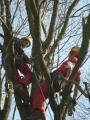 Gestione delle emergenze e recupero del ferito in tree climbing gestione-emergenze-tree-climbing-mark-bridge-003.jpg