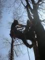 Gestione delle emergenze e recupero del ferito in tree climbing gestione-emergenze-tree-climbing-mark-bridge-004.jpg