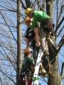 Gestione delle emergenze e recupero del ferito in tree climbing gestione-emergenze-tree-climbing-mark-bridge-005.jpg