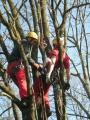Gestione delle emergenze e recupero del ferito in tree climbing gestione-emergenze-tree-climbing-mark-bridge-006.jpg