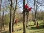 Gestione delle emergenze e recupero del ferito in tree climbing gestione-emergenze-tree-climbing-mark-bridge-007.jpg