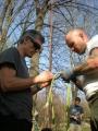 Gestione delle emergenze e recupero del ferito in tree climbing gestione-emergenze-tree-climbing-mark-bridge-008.jpg