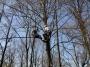 Gestione delle emergenze e recupero del ferito in tree climbing gestione-emergenze-tree-climbing-mark-bridge-009.jpg