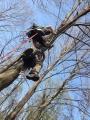 Gestione delle emergenze e recupero del ferito in tree climbing gestione-emergenze-tree-climbing-mark-bridge-010.jpg