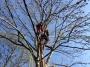 Gestione delle emergenze e recupero del ferito in tree climbing gestione-emergenze-tree-climbing-mark-bridge-016.jpg