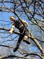 Gestione delle emergenze e recupero del ferito in tree climbing gestione-emergenze-tree-climbing-mark-bridge-017.jpg