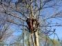 Gestione delle emergenze e recupero del ferito in tree climbing gestione-emergenze-tree-climbing-mark-bridge-018.jpg