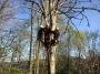 Gestione delle emergenze e recupero del ferito in tree climbing gestione-emergenze-tree-climbing-mark-bridge-019.jpg