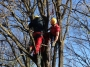 Gestione delle emergenze e recupero del ferito in tree climbing gestione-emergenze-tree-climbing-mark-bridge-022.jpg